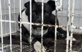 Animales afectados por el incendio en Valparaíso son atendidos en Hospital Clínico Veterinario UST Viña del Mar