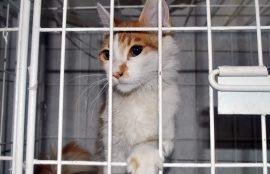 Animales afectados por incendio en Valparaíso buscan ser adoptados. Hospital Clínico Veterinario UST Viña del Mar