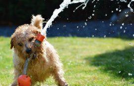 cuidado de mascotas en el verano