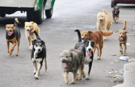 Seminario Protección Animal